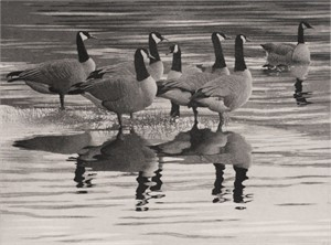 Geese, 2014