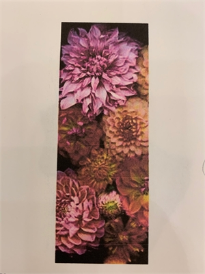 Dahlia Explosion Scarf, Georgette by Laurie Tennent