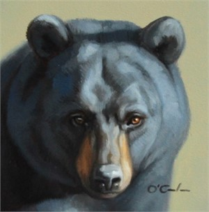Black Bear Portrait, 2019