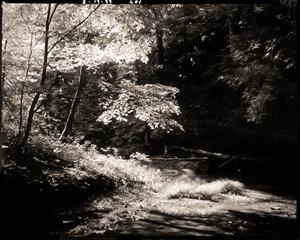 (#204) Grass, Cedar Falls by Frank Hunter