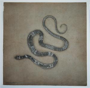 Coachwhip Snake , 2019
