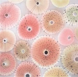 Sea Urchin VI