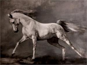 Stallion's Gait