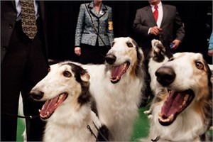 Three Borzois, from the Canine Kingdom Series, New York, New York, 2010