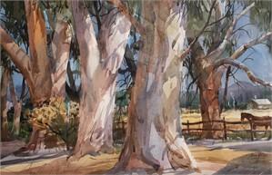 Eucalyptus Trees, 2018