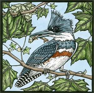 Belted Kingfisher (10/20)