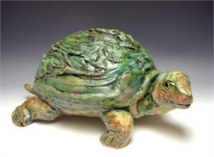 Tomas (turtle), 2019