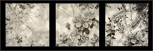Microcosm (triptych)