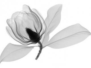 Southern Magnolia by Don Dudenbostel