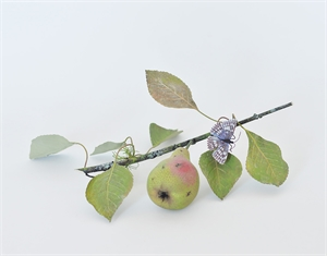 GREEN PEAR BRANCH WITH SKIPPER BUTTERFLY, 2013
