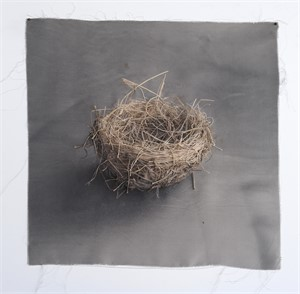 Untitled Nests #9 (1/20), 2018