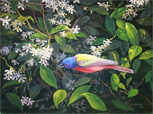 Hidden Treasure, Painted Bunting