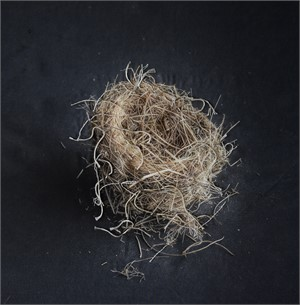 Untitled Nests #21 (1/20), 2018