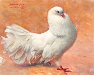 White Dove 36