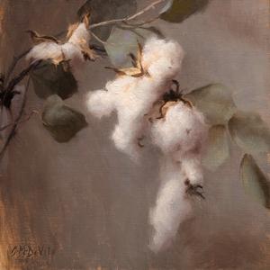 Cotton Bough