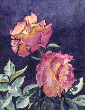 Two Pinata Roses, 2018