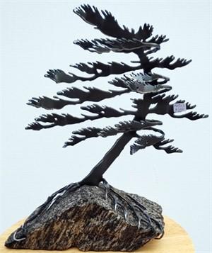 Dancing Pine, 3113