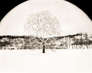 Tree in Winter (1/34) by Frank Hunter