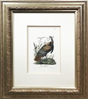 Wild Turkey - Male No. 58, Plate 287, 2008