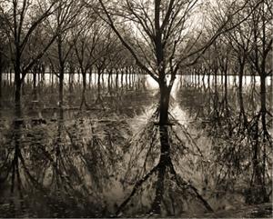 Pecan Trees, near La Union, NM (#180) by Frank Hunter