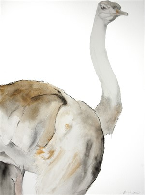Female Ostrich - Profile, 2016