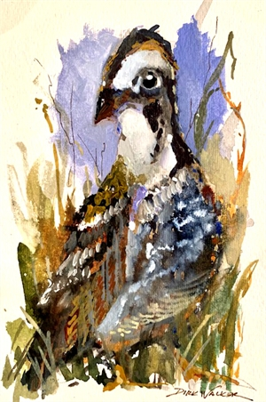 Young Male Quail by Dirk Walker
