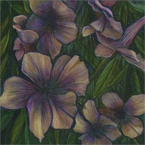 Study for Mexican Petunia