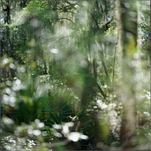 Sapelo Island Forest by Kathryn Kolb