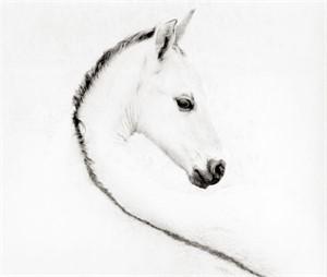 """The Foal - Unframed - 21""""x 24"""" (104/200)"""