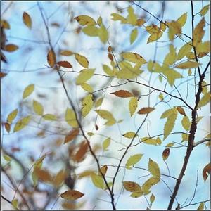 Winged Oak at Cochran Mill by Kathryn Kolb