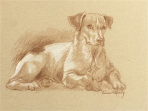 Jack Russell drawing