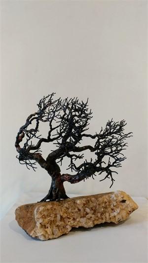 Wind Bloom Oak