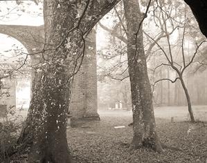 (#207) Trees in Fog  Behind Sheldon Church Ruins  (2/21) by Frank Hunter