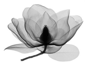 Southern Magnolia 2 by Don Dudenbostel
