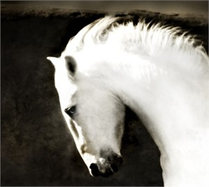 "Ghost Horse - 17""x 19""- Unframed (39/200)"