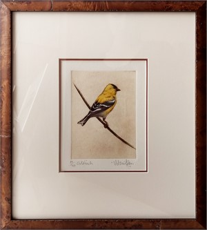 Goldfinch_F