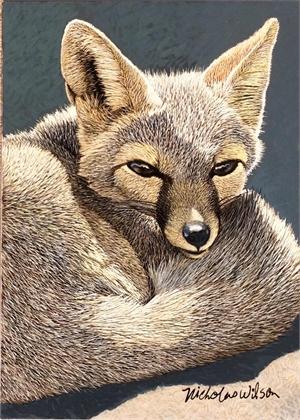Desert Kit Fox, 2020