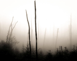 Two Trees in Fog, Mt Mitchell, NC (#145) by Frank Hunter