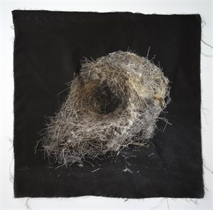 Untitled Nests #12 (1/20), 2018