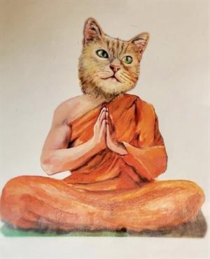 Zen Cat, 2020