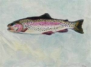 Rainbow Trout, 2017
