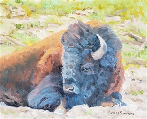 Bison at Rest by Virginia Grass-Simmons