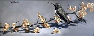 Hummingbird on Palo Verde