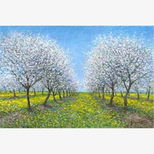 Cherry Blossoms (AP)
