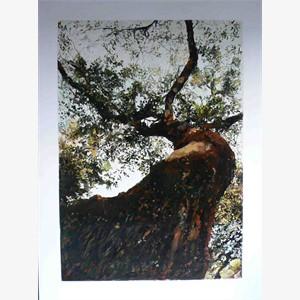 The Tree No. 2