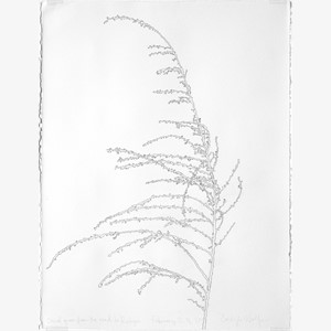 Dried Grass II