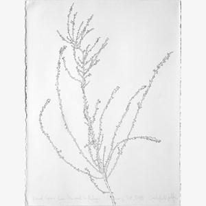 Dried Grass I