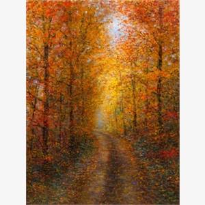 Wilderness Road (AP)