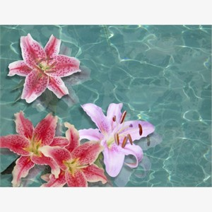 Reflecting Lilies