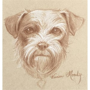 Drawing of Terrier